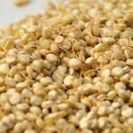 Graines germées de Quinoa déshydratées à – de 42°c – qualité cru – biologique